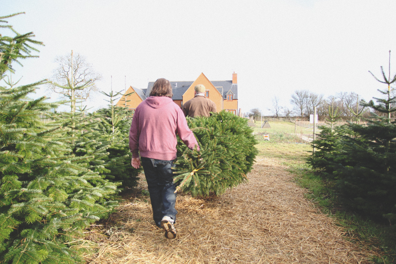 Read At The Christmas Tree Farm by April