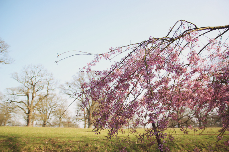 Read Woburn Abbey Gardens by April