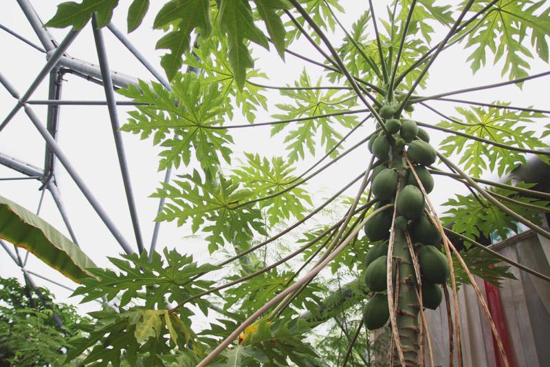 Eden Project - Rainforest Biome