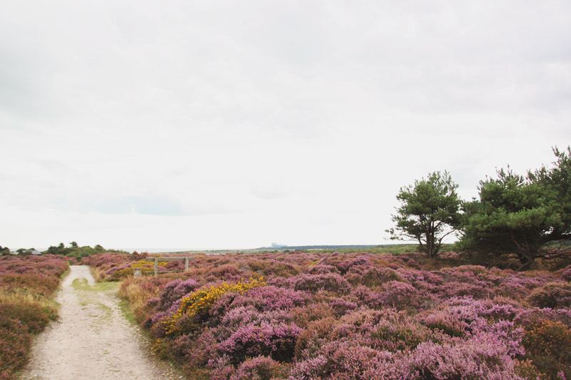Dunwich Heath