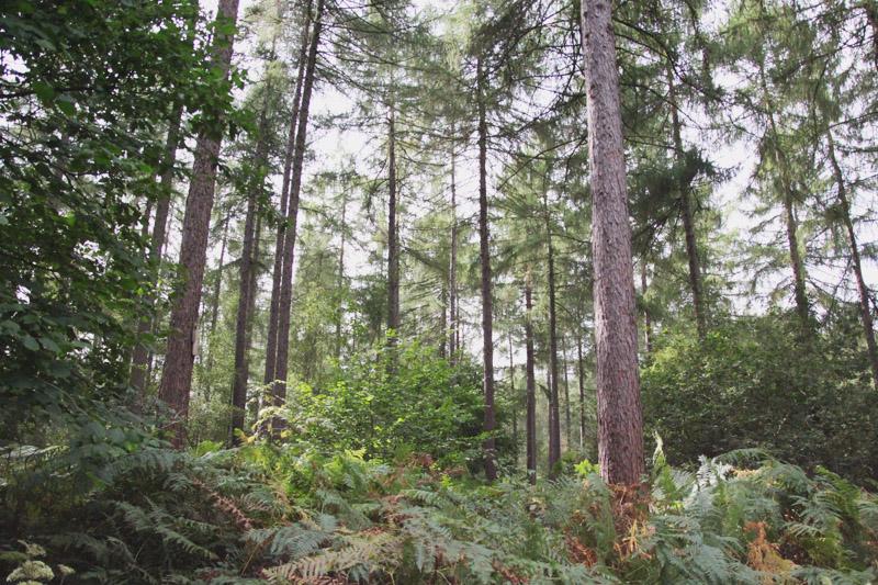 Wakerly Woods