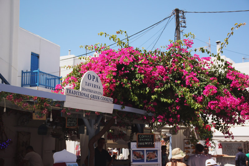 Read Exploring the Colourful Streets of Mykonos Town by April