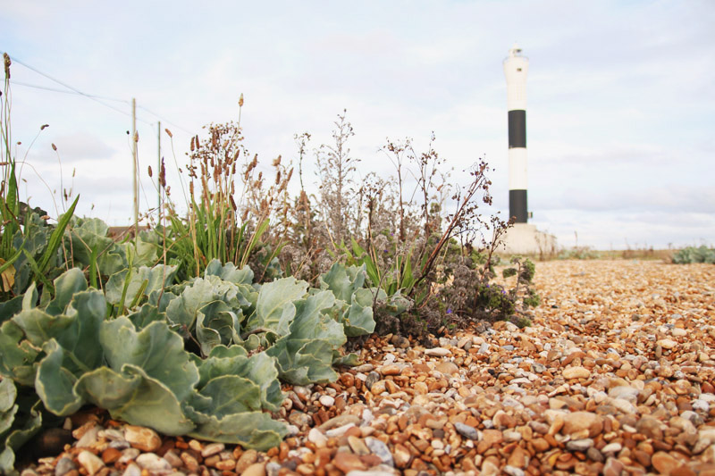 Read Dungeness Lighthouse & Nature Reserve by April