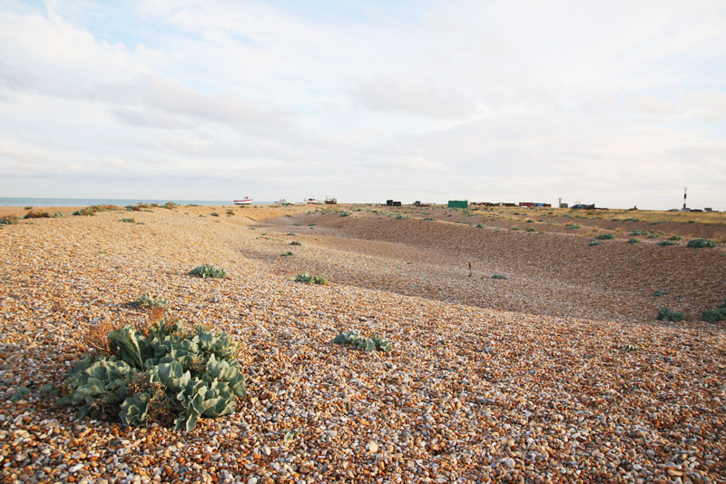 Dungeness Nature Reserve