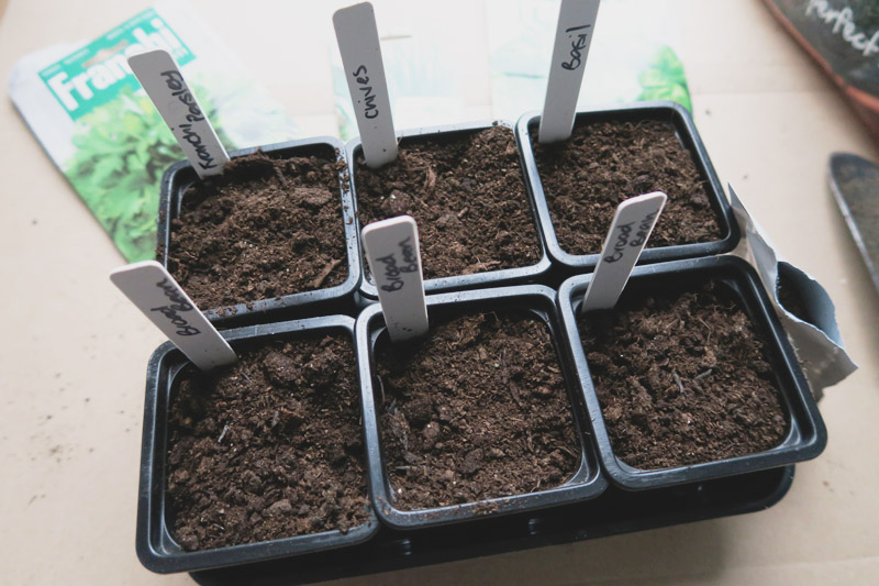 Vegetable Garden, Sowing Seeds