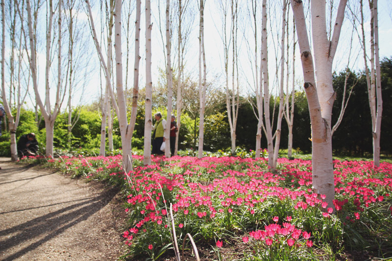 Read Tulips at Anglesey Abbey by April
