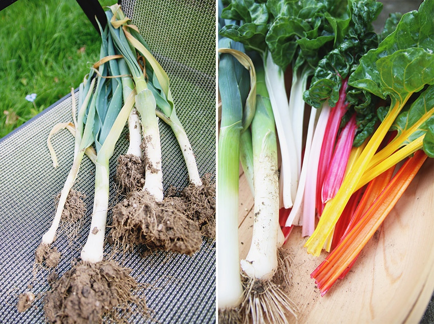 Vegetable Garden / Rainbow Chard & Leek Harvest