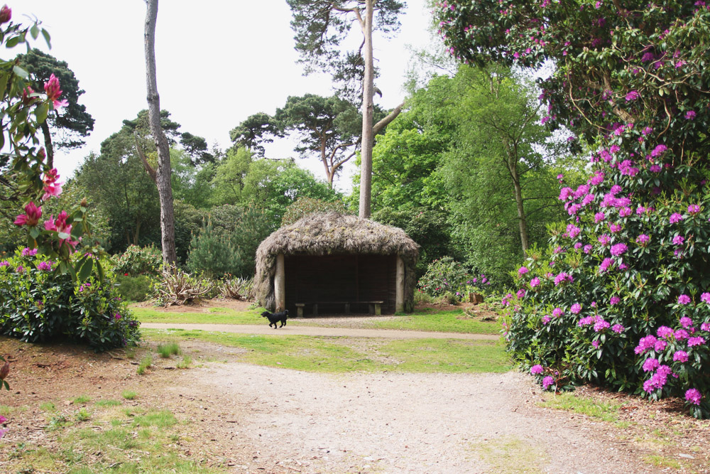 Read Rhododendrons at Sheringham Park by April