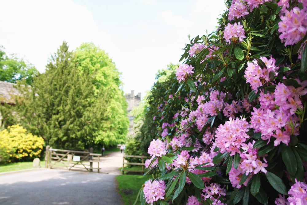 Gawthorpe Hall Rhododendrons