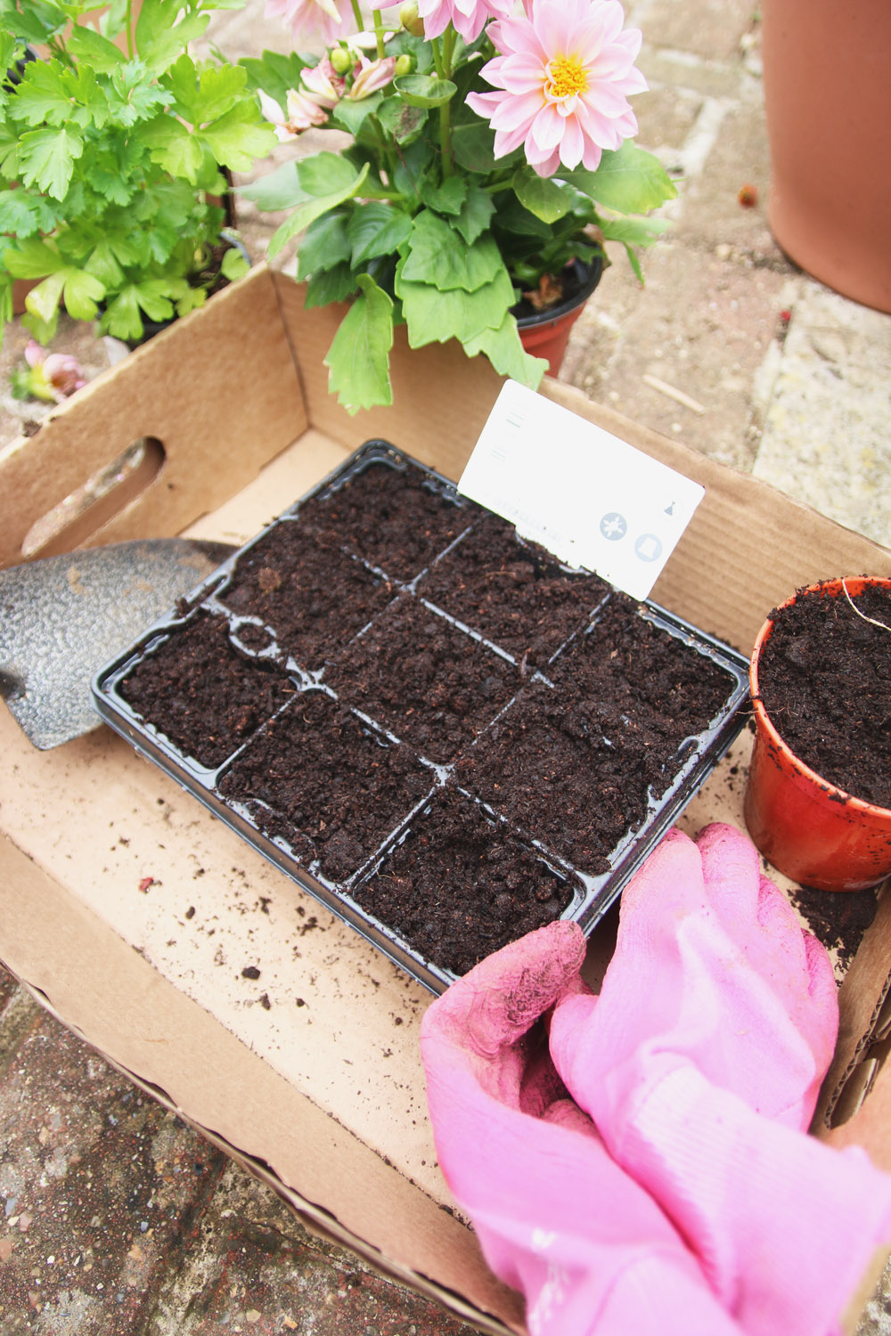 Vegetable Garden - Sowing Seeds