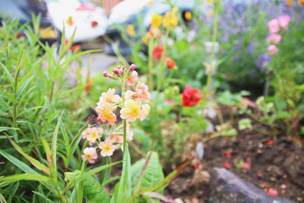 Flower Haul