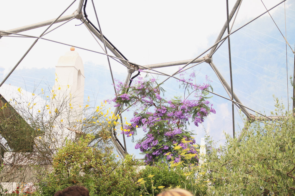 The Mediterranean Biome, The Eden Project