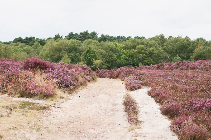 Read Dunwich Heath and Beach by April