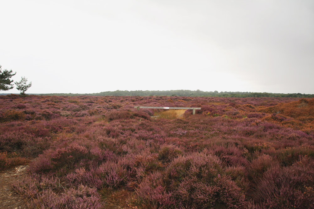 Dunwich Heath, Suffolk