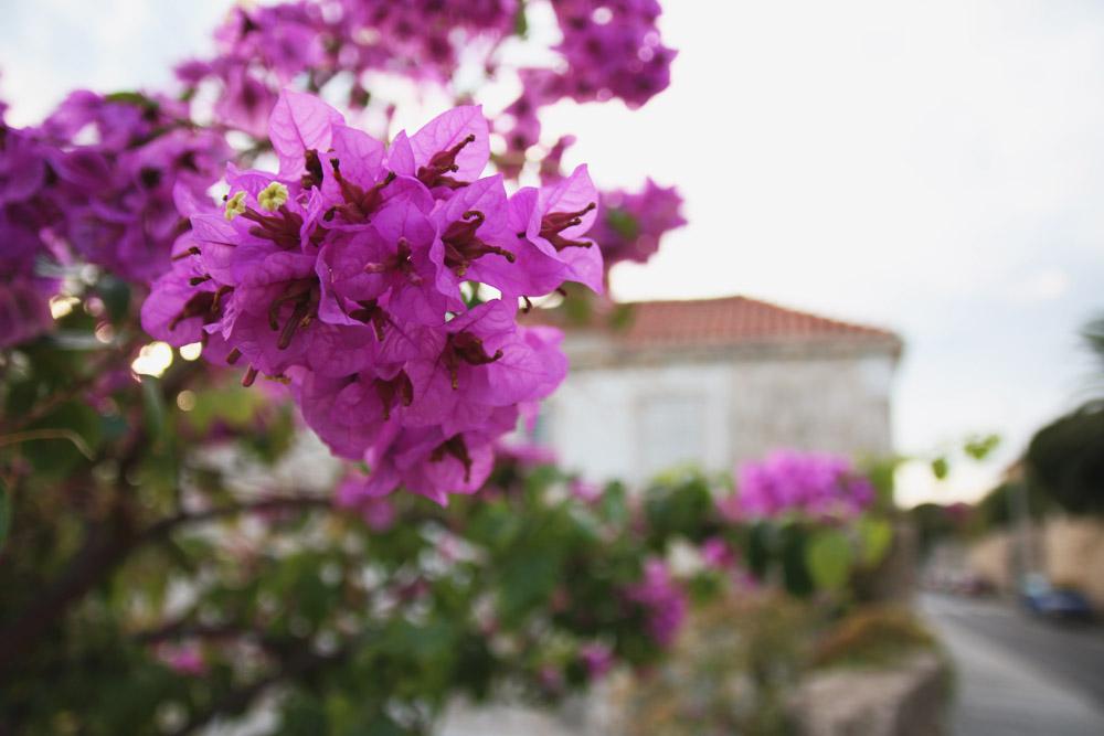Dubrovnik Bougainvillea, Croatia