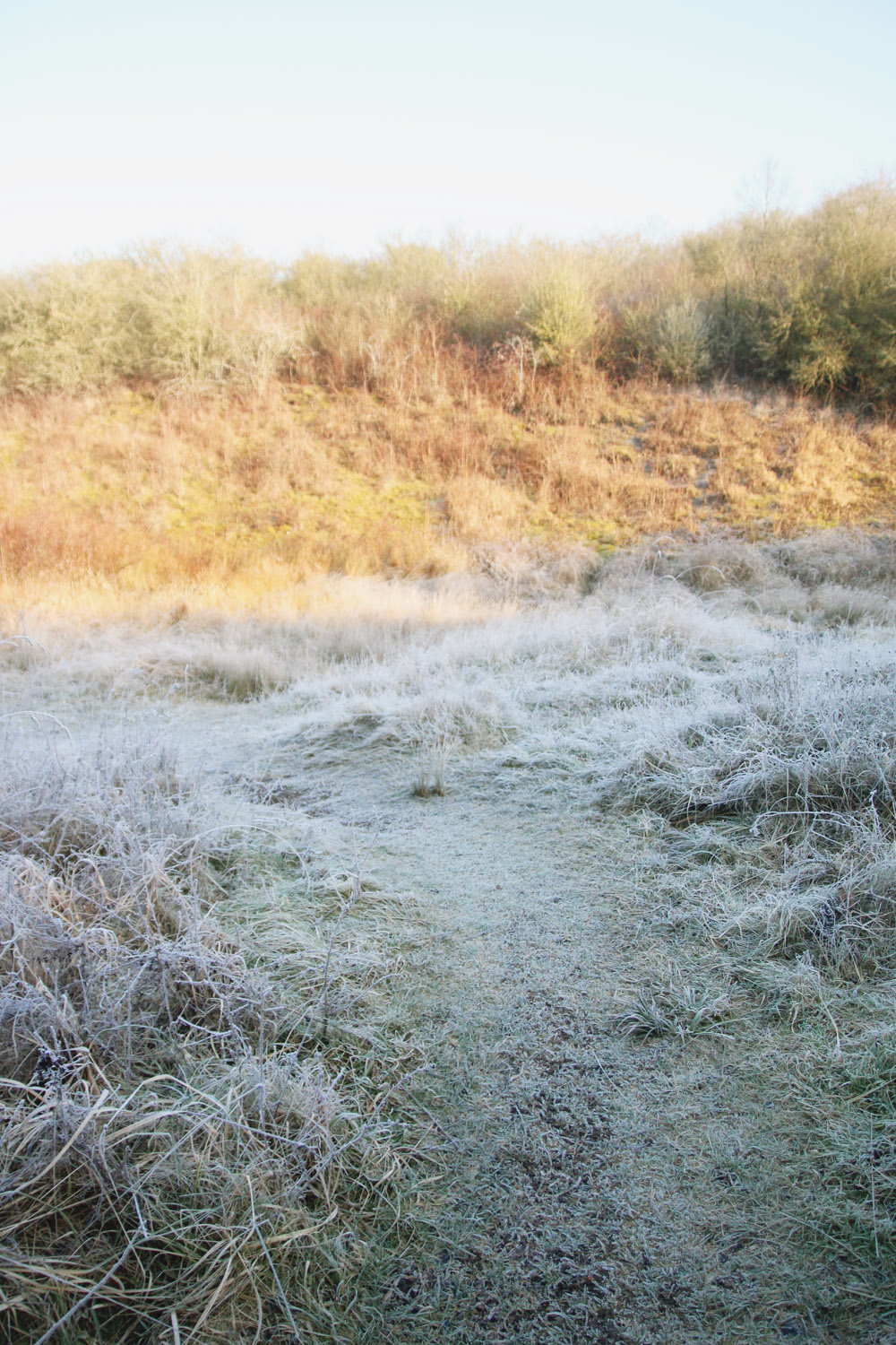 Frosty Winter Walks