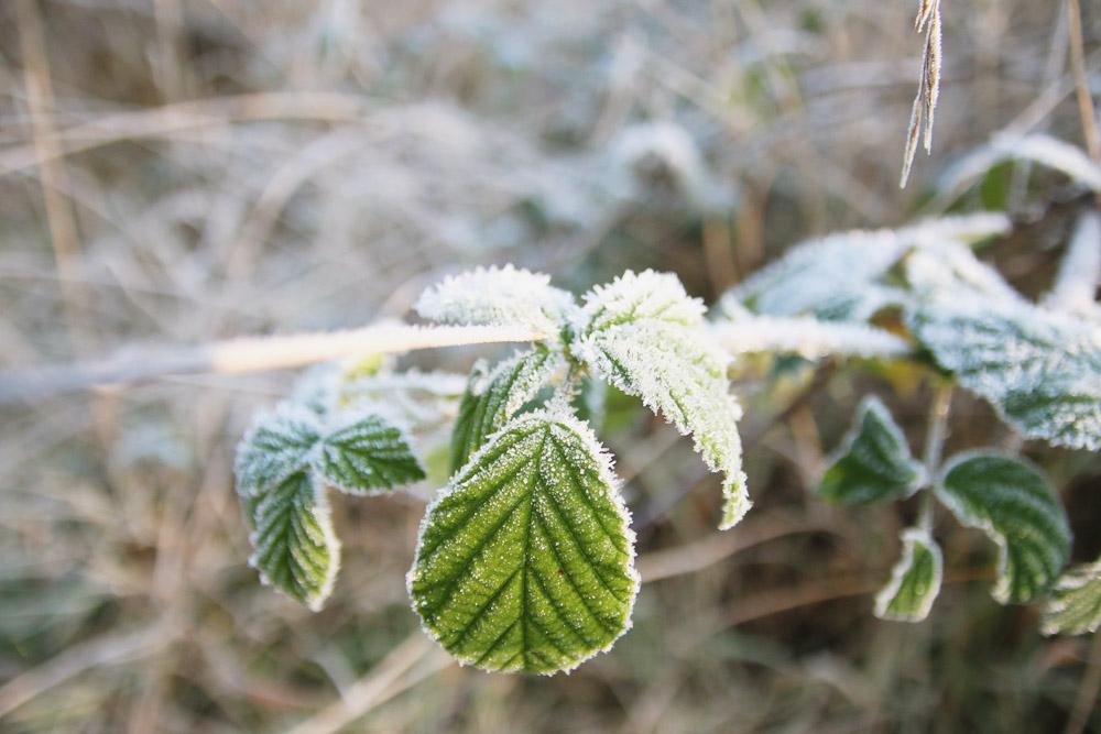 Frosty Winter Walks