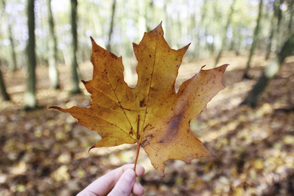 Grafham Water Autumn Leaf