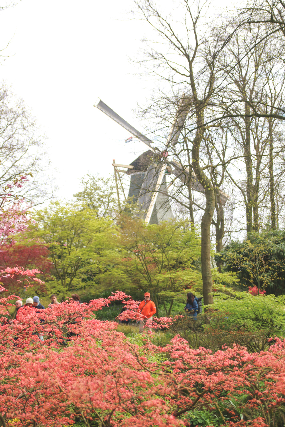 Windmill at Keukenhof Gardens, Holland