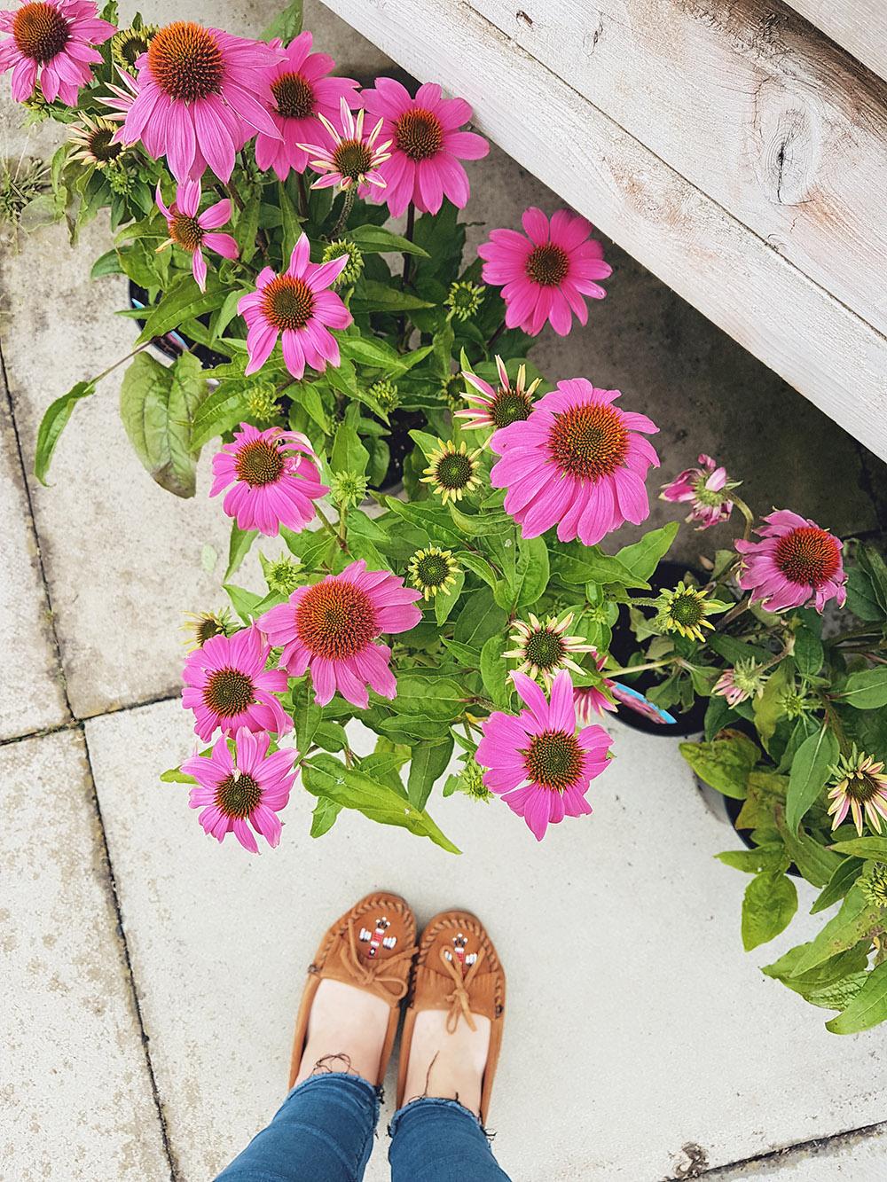 Summer Flowers - Echinacea