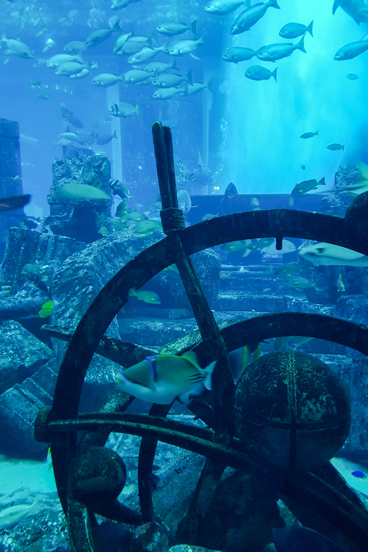 The Lost Chambers Aquarium at Atlantis the Palm, Dubai