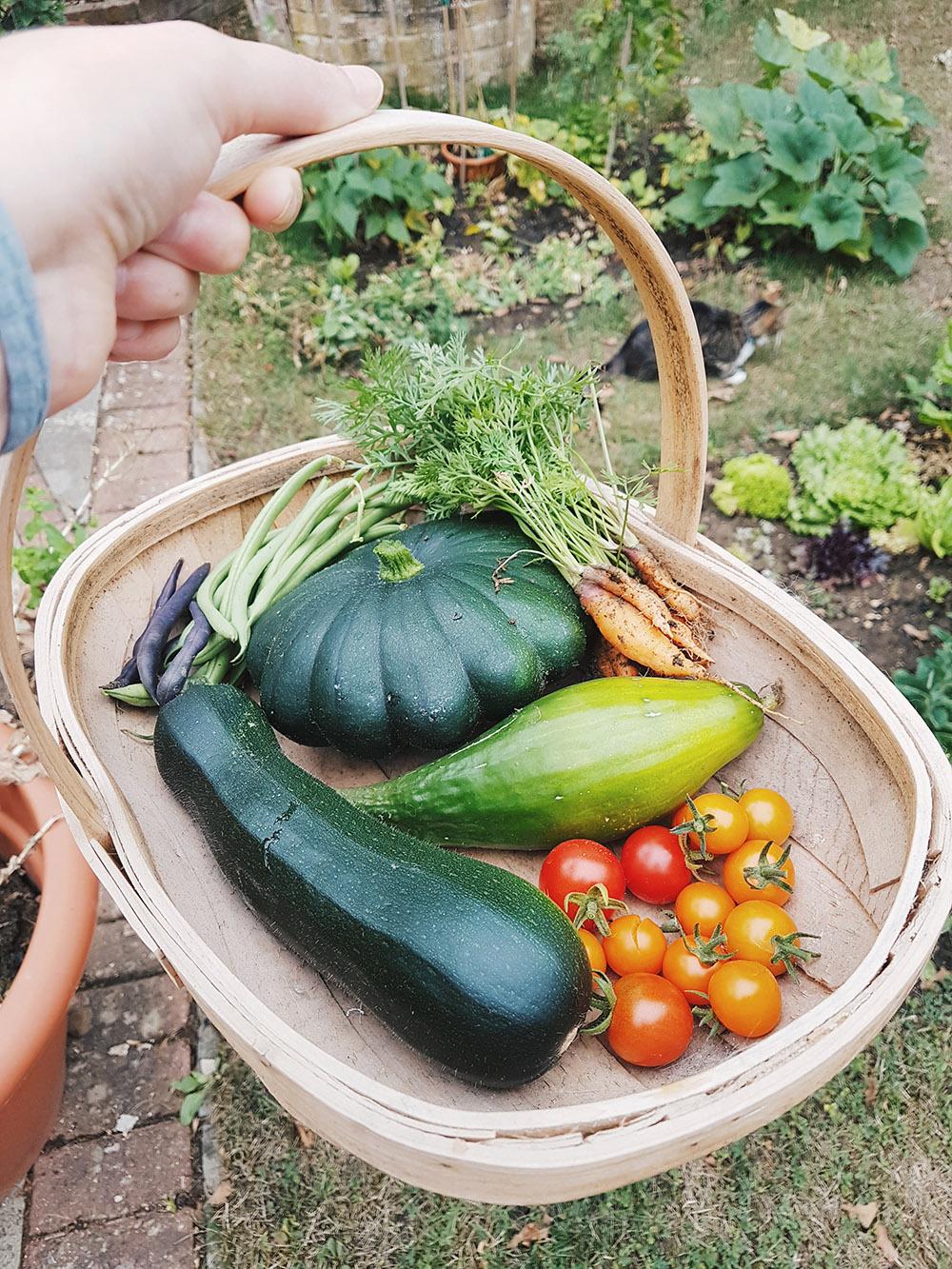Vegetable Garden Harvest