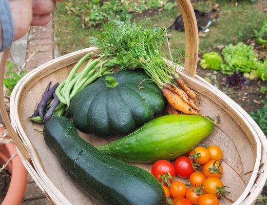 Mini Garden Harvest - 2018
