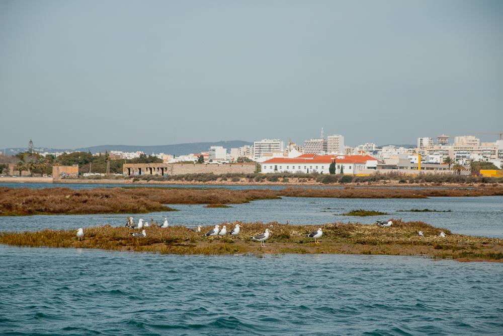 Birds in Ria Formosa Natural Park