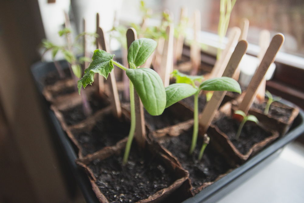 Grow Your Own - Seedlings