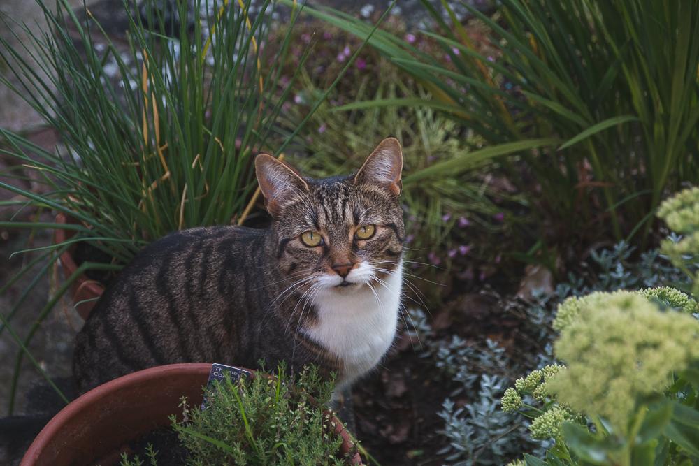 Keeko the Cat