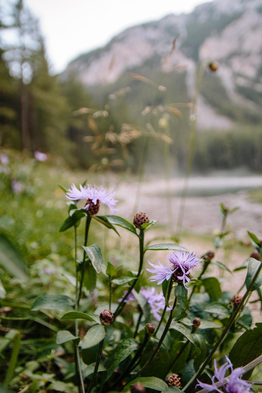 Gruner See Lake in Summer