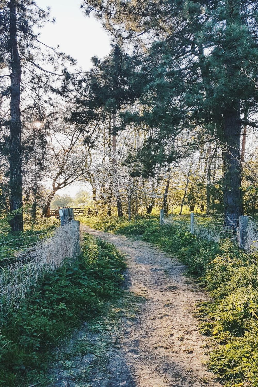 Spring Evening Walk