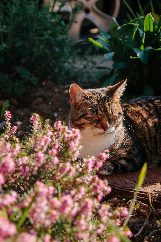 Keeko in Spring