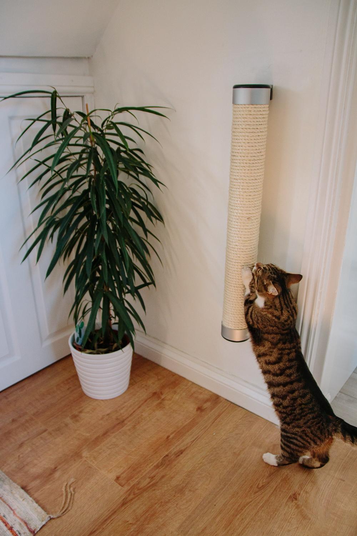 Catipilla 75cm Wall Mounted Cat Scratcher in Use - Keeko