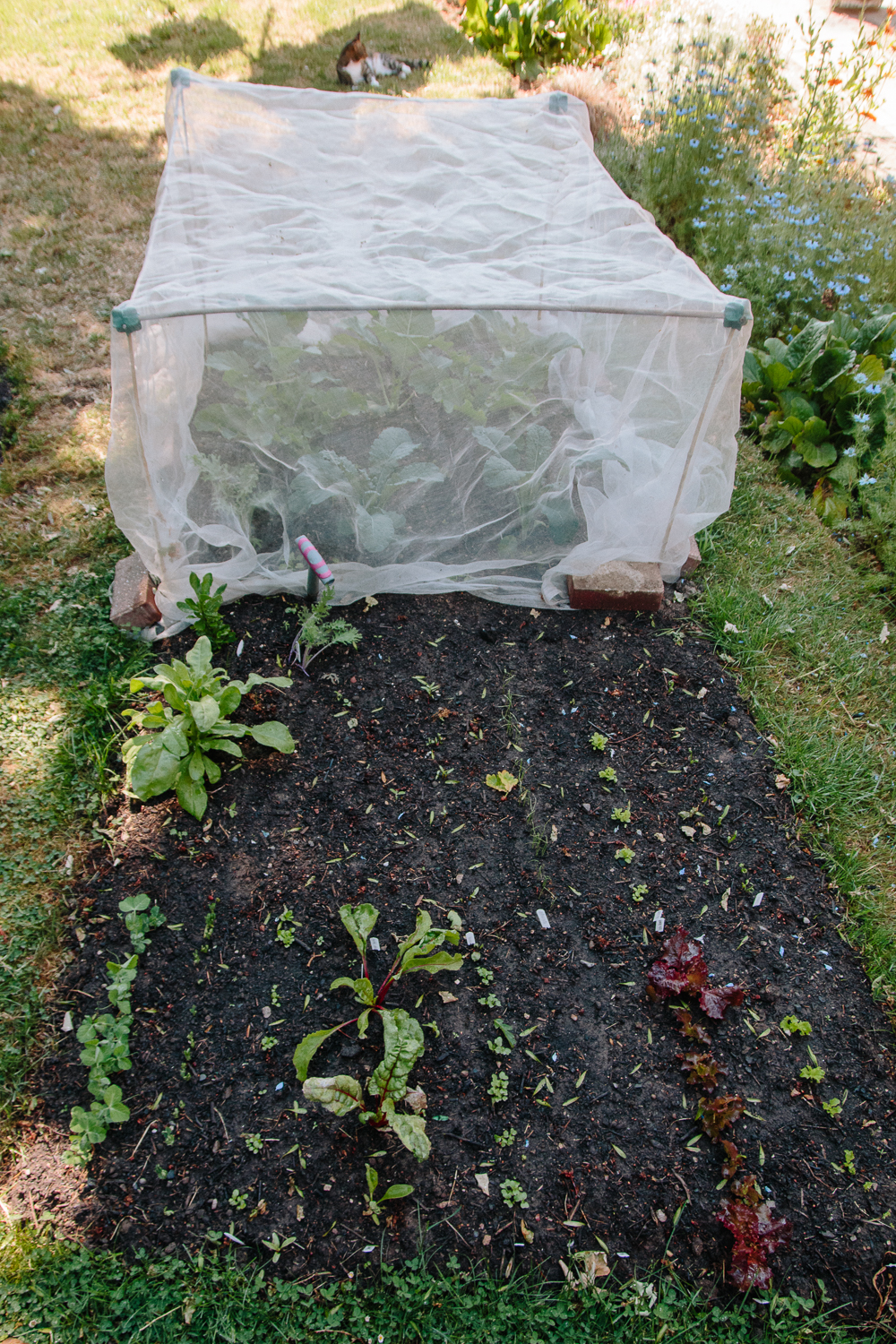 Grow Your Own May 2020 Garden