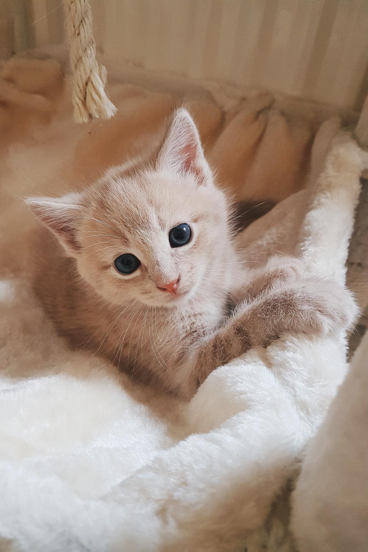 Oslo Foster Cat