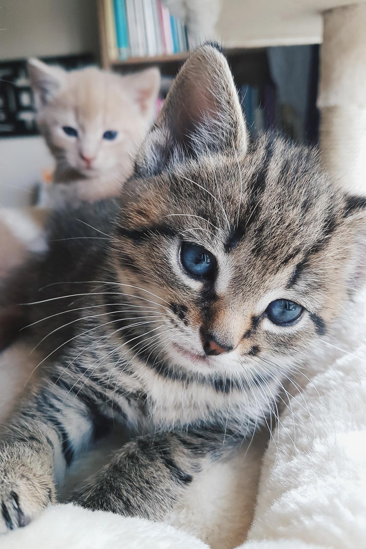Austin Foster Cat