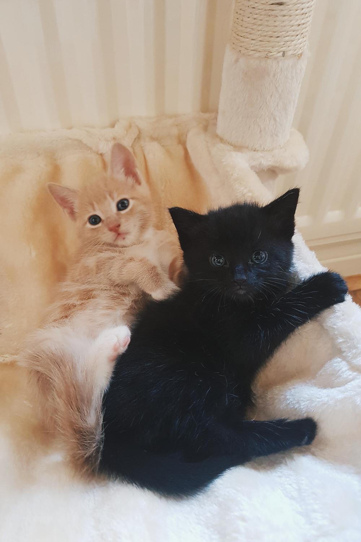 Nova and Phoenix Foster Kittens