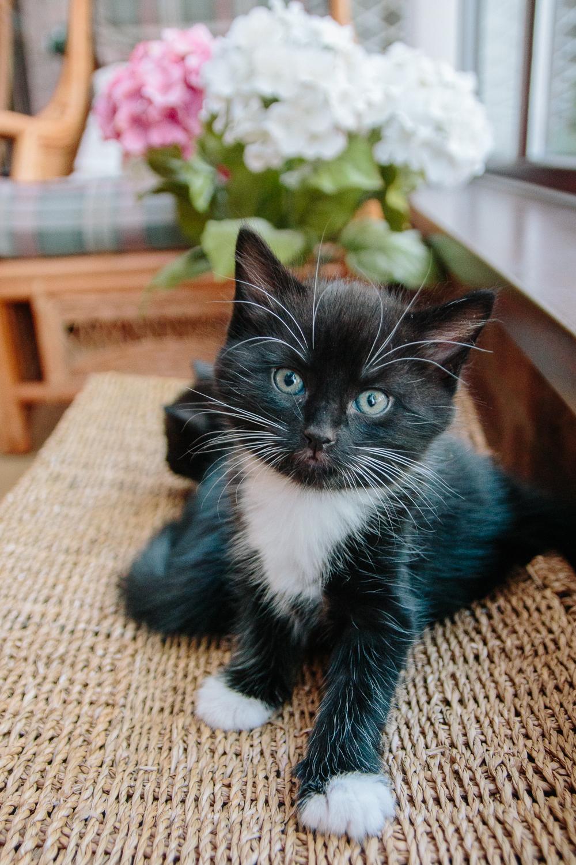 Orion and Nova Foster Kittens