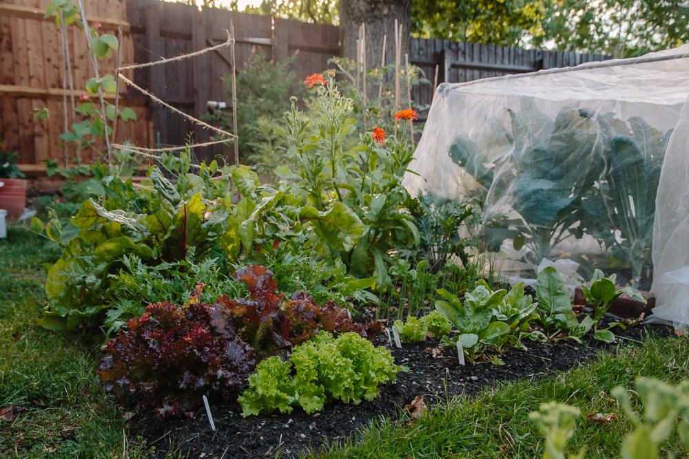 The Salad Bed Vegetable Garden