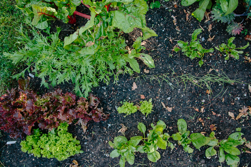 The Salad Bed Vegetable Garden
