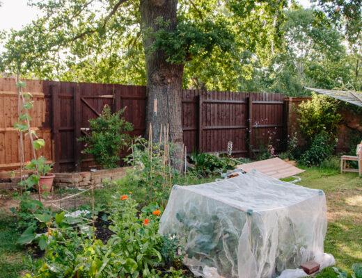Vegetable Garden June 2020