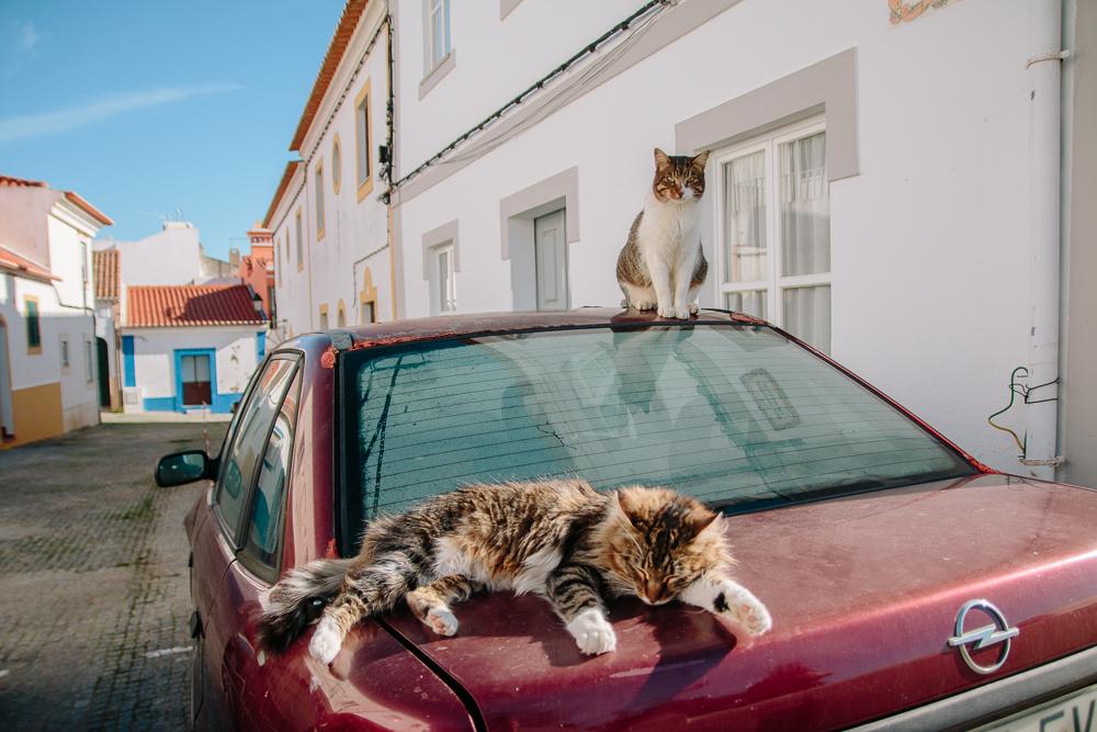 Cats in Vila Nova de Milfontes