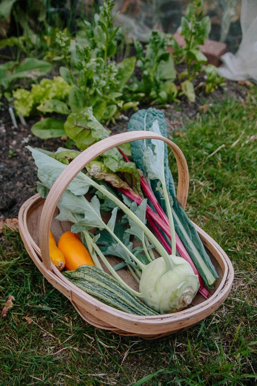 July 2020 Vegetable Harvest