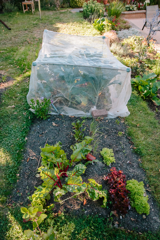 Vegetable Garden July 2020