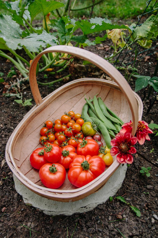 Tomato + Runner Bean Harvest