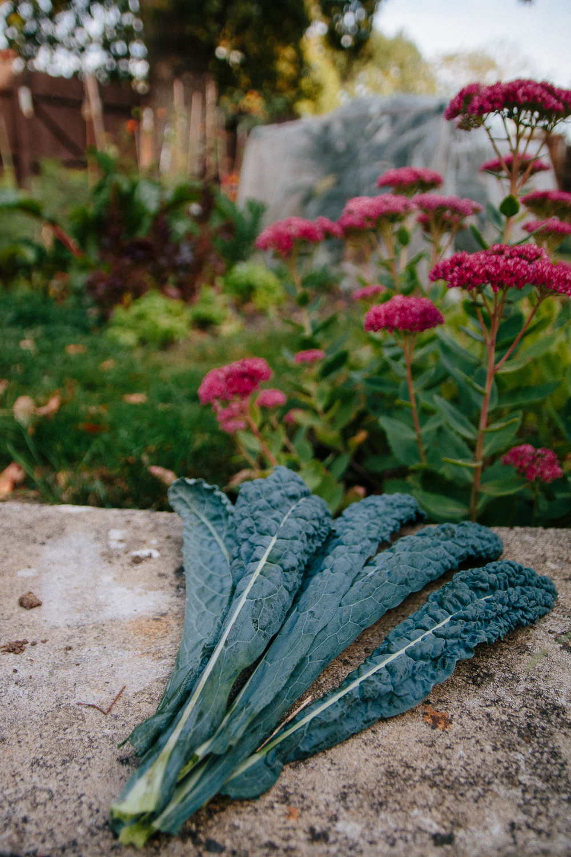 Cavelo Nero Kale Leaves