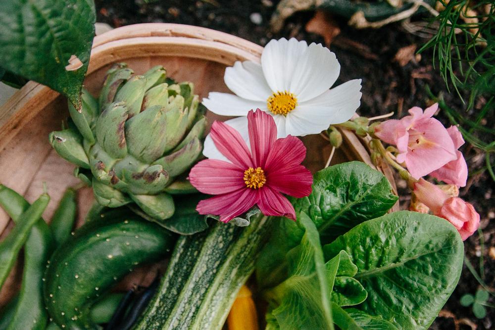 Mini Vegetable Garden Harvest