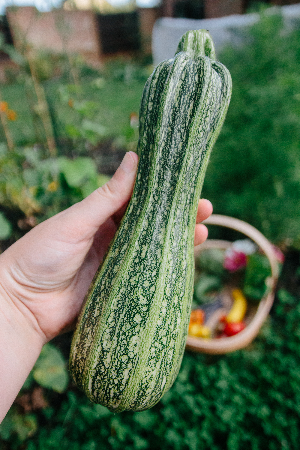 Courgette Marrow
